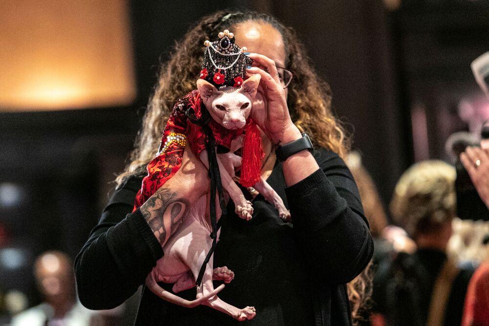 Kot Wasabi przed rozpoczęciem pokazu mody Algonquin Hotel's Annual Cat Fashion Show w Nowym Jorku