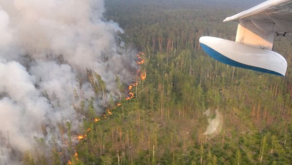 Pożary lasów na Syberii - Sputnik Polska