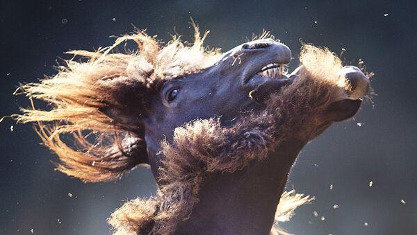 Konie - Sputnik Polska