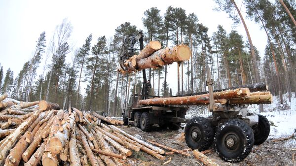 Рубка леса в Челябинской области - Sputnik Polska