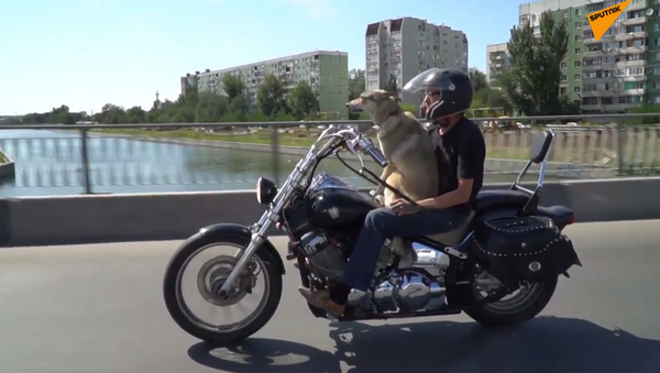 Pies motocyklista - Sputnik Polska