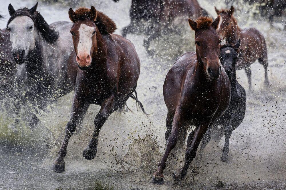 Konie w Mongolii