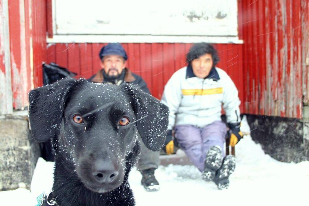 Mieszkańcy Grenlandii
