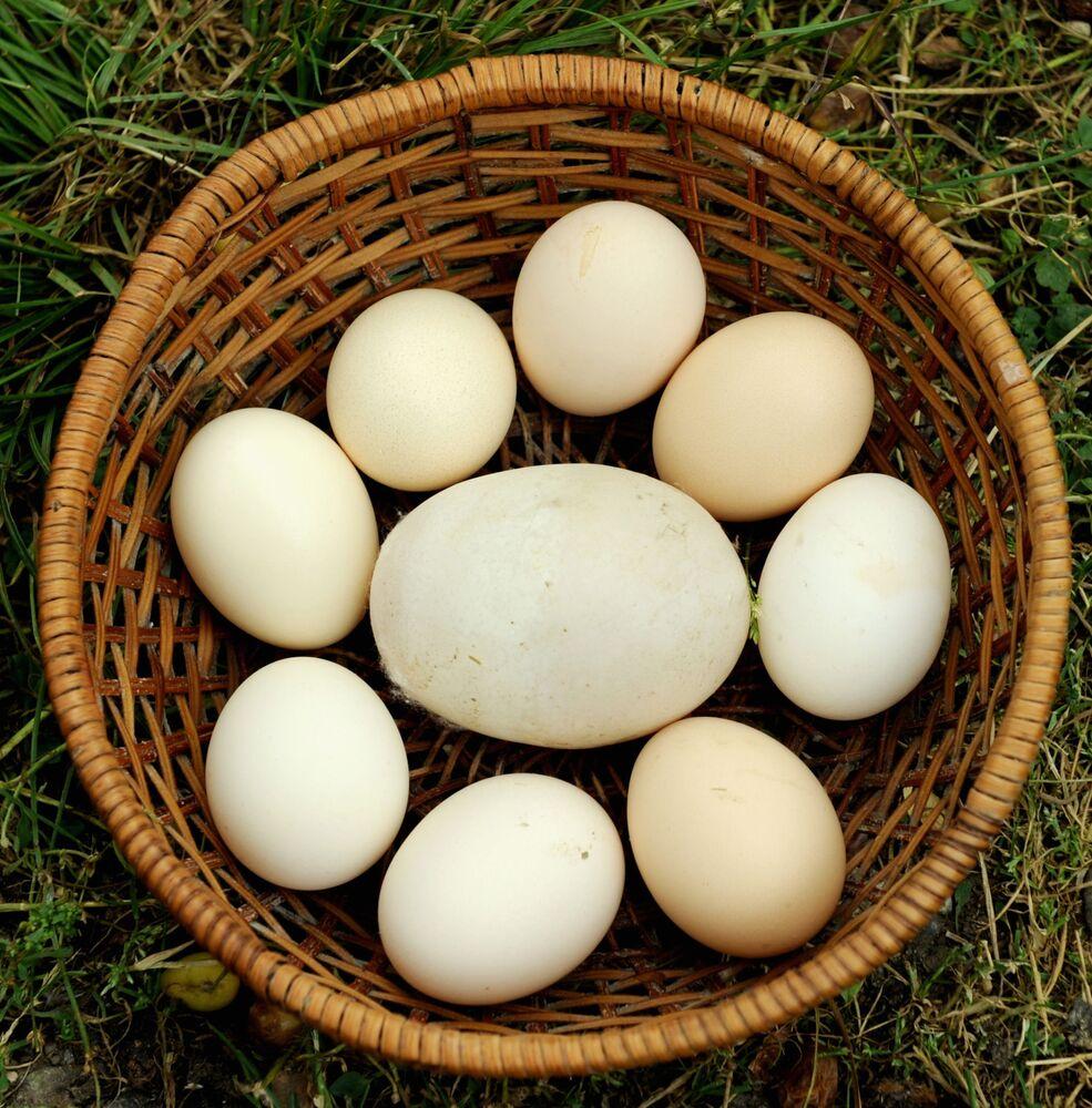 Gigantyczne jajo z Gruzji o wadze 170 gramów, 2010 rok