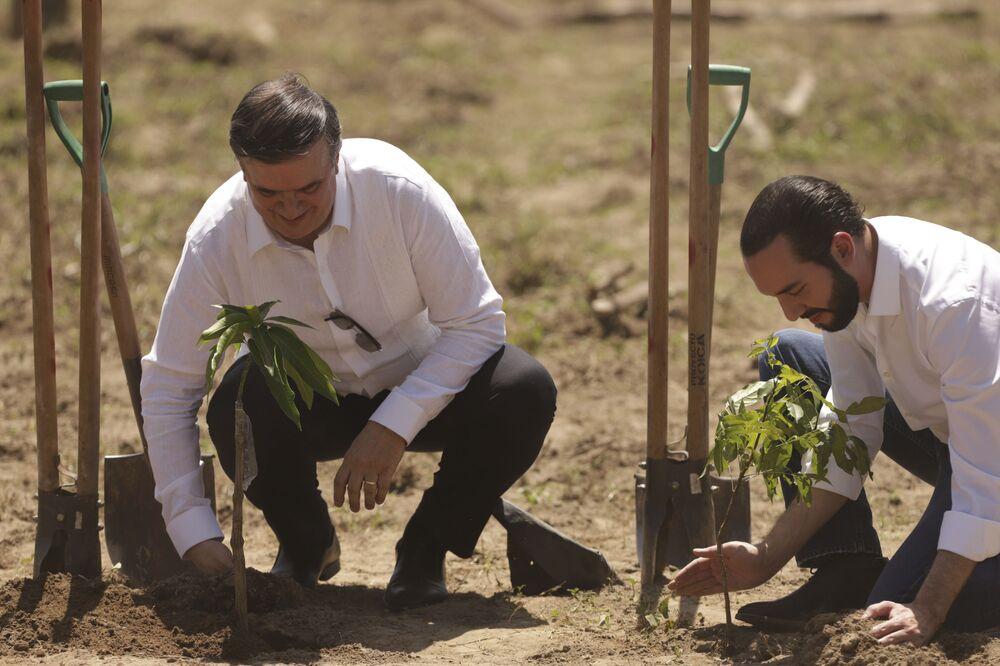 Prezydent i minister spraw zagranicznych Salwadoru sadzą rośliny