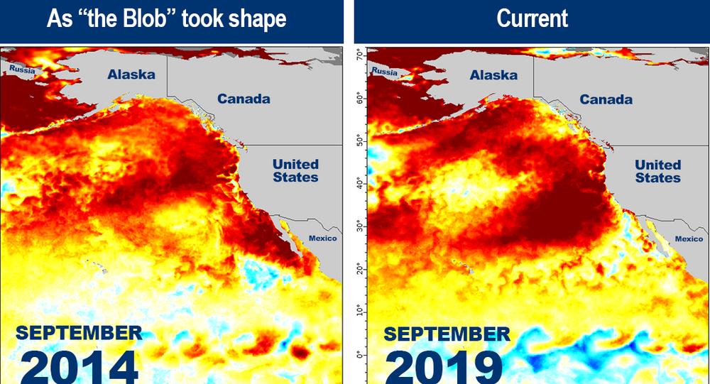 Lokalny wzrost temperatury u zachodnich wybrzeży Ameryki Północnej