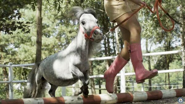 Najmniejszy na świecie koń, zarejestrowany w Księdze Rekordów Guinnessa - Sputnik Polska