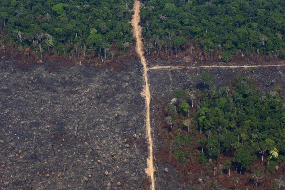 Spalony teren w Jamanxim National Forest, Brazylia.