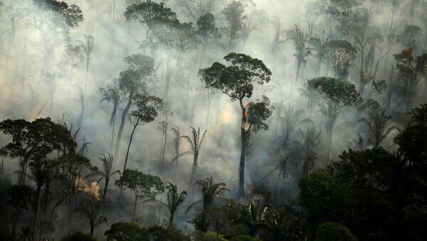 Dym nad płonącym lasem podczas pożaru w dżungli amazońskiej w pobliżu Porto Velho, Rondonia, Brazylia - Sputnik Polska