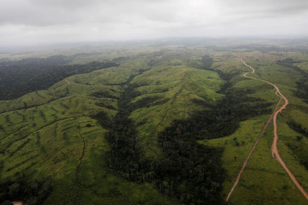 Widok z lotu ptaka na bezdrzewne obszary w lasach Amazonii w Brazylii.