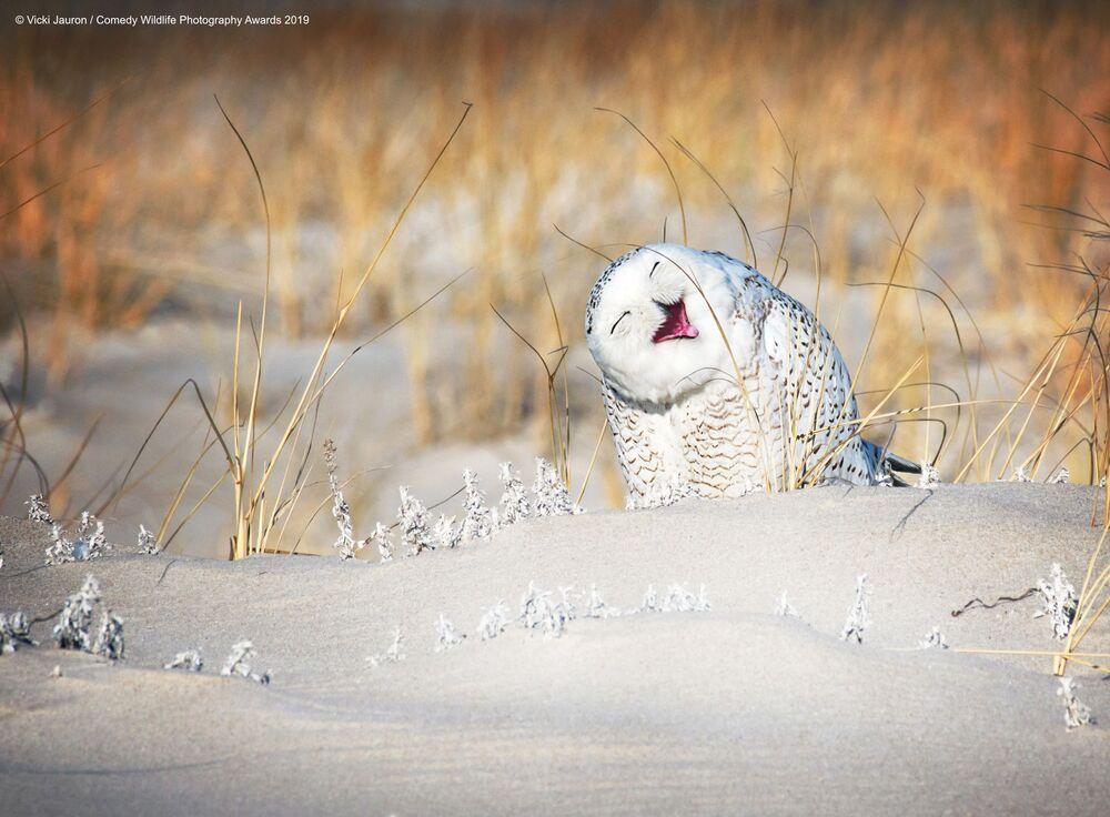 Roześmiana sowa zimową porą...