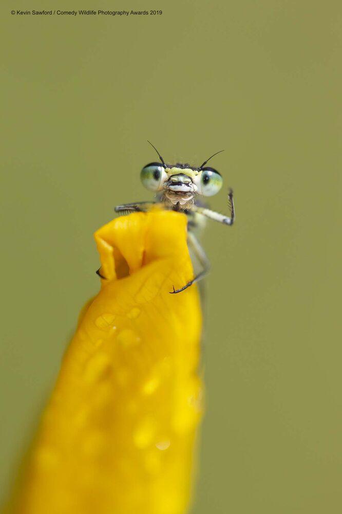 Uśmiechnij się! ktoś właśnie do ciebie macha z żółtego kwiatka
