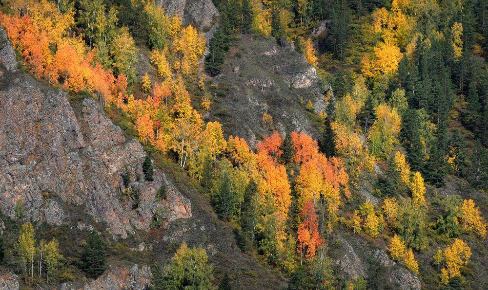 Jesienna tajga syberyjska na skalistym brzegu rzeki Jenisej w pobliżu Diwnogorska