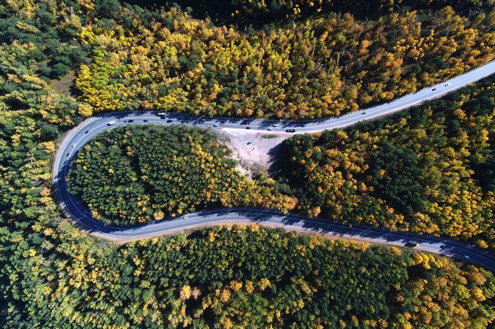 Jesienna tajga syberyjska w okolicach Krasnojarska