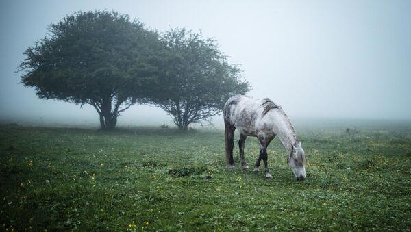 Koń na łące - Sputnik Polska