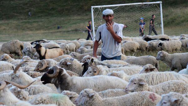 Pastuch na wsi w Dagestanie - Sputnik Polska
