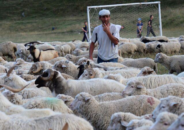Pastuch na wsi w Dagestanie
