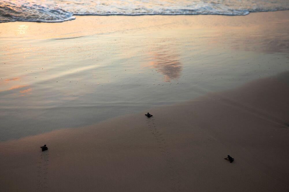 Młode żółwie morskie w izraelskim Centrum Ratowania Żółwi Morskich w Tel Awiwie.