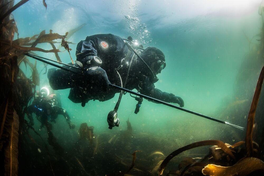 Nurek eksploruje dno zatoki Nowokurylskiej Morza Ochockiego w pobliżu wyspy Urup (wyspa południowej grupy Wielkiego Grzbietu Wysp Kurylskich).