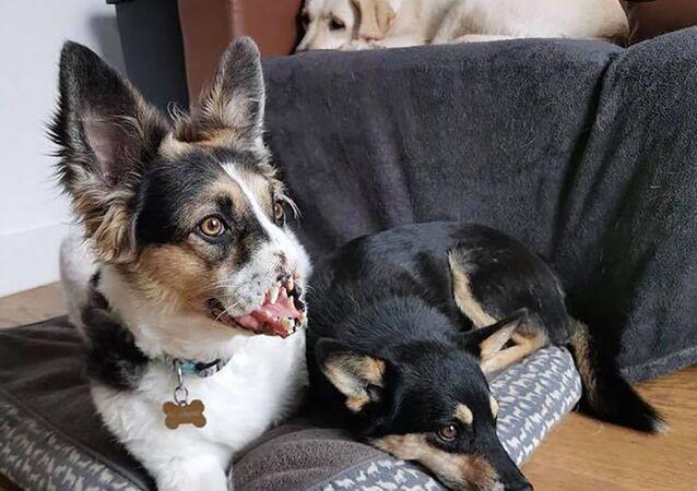 Pies Bonnie bez nosa i łapy podbija Instagrama