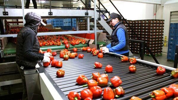 Sortowanie owoców, Holandia - Sputnik Polska