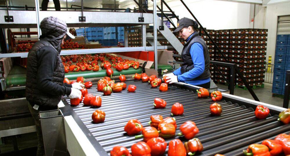 Sortowanie owoców, Holandia