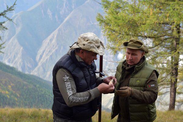 Władimir Putin i Siergiej Szojgu zbierają grzyby - Sputnik Polska