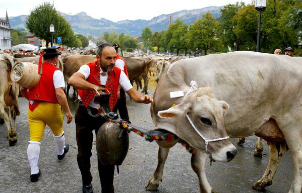 Tradycyjny pokaz bydła w Alpach - Sputnik Polska