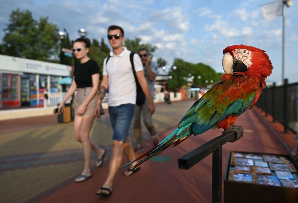 Papuga na promenadzie w Soczi