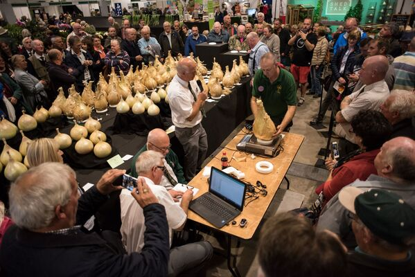 Ważenie gigantycznej cebuli podczas konkursu Autumn Flower Show w 2018 roku  - Sputnik Polska