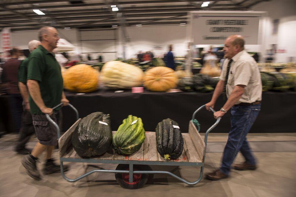 Konkurs gigantycznych warzyw w ramach Autumn Flower Show w Wielkiej Brytanii. 2016 rok