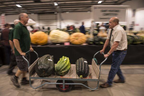 Konkurs gigantycznych warzyw w ramach Autumn Flower Show w Wielkiej Brytanii. 2016 rok - Sputnik Polska