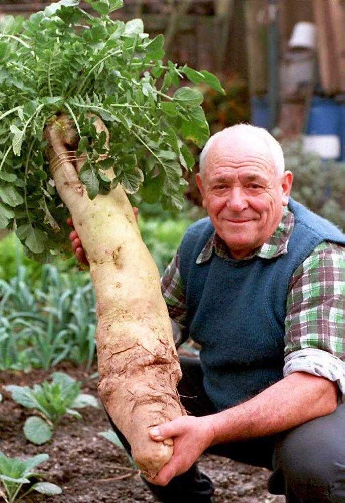 71-letni Oscar Wittmer prezentuje olbrzymi białą rzepę ważącą 23 funty