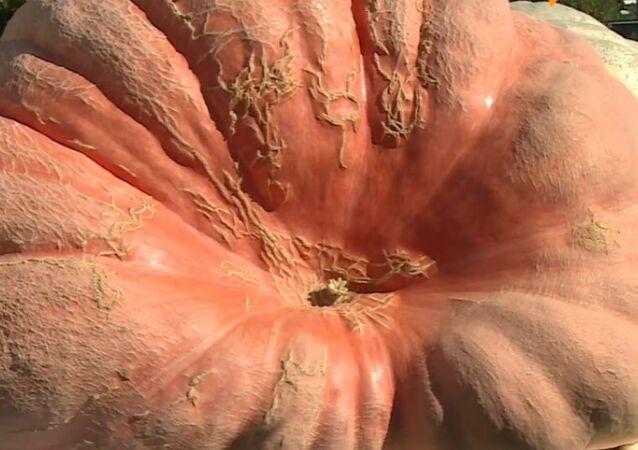 Gigantyczna dynia