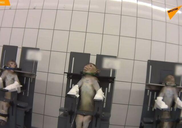 Szokujące tortury w niemieckim laboratorium