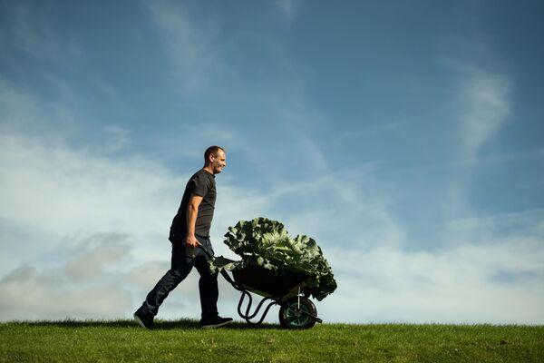 Rolnik Craig Pearson ze swoją gigantyczną kapustą o wadze 27.4 kg - Sputnik Polska