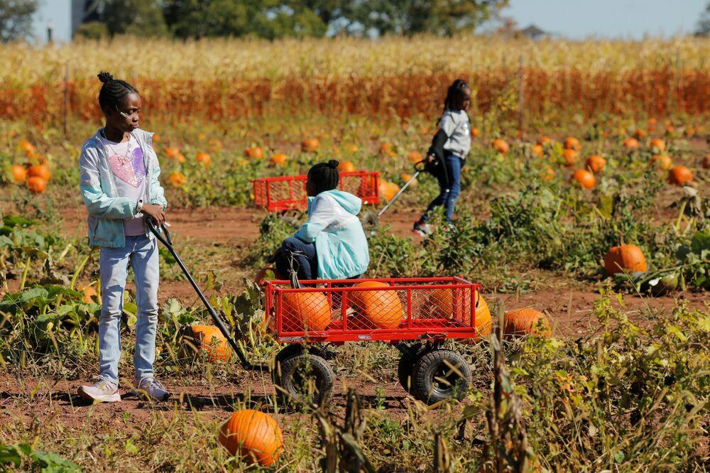 Dzieci na polu dyniowym w New Jersey, USA