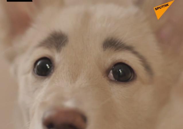 Pies ma wyraziste brwi