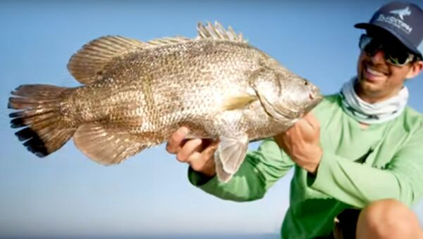 Ryba, którą złowiono w USA  - Sputnik Polska