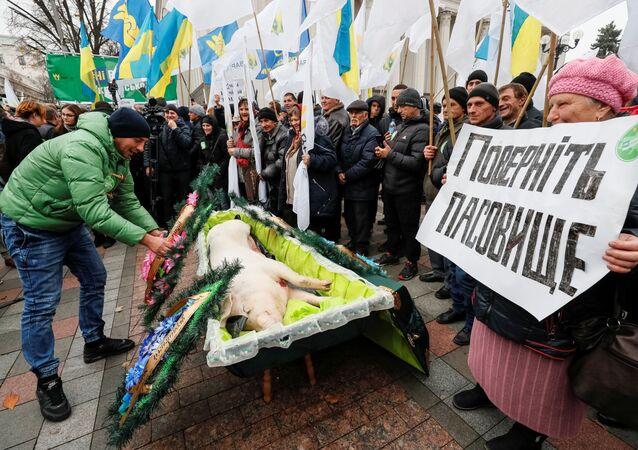 Martwa świnia w trumnie na akcji przed budynkiem Rady Najwyższej w Kijowie