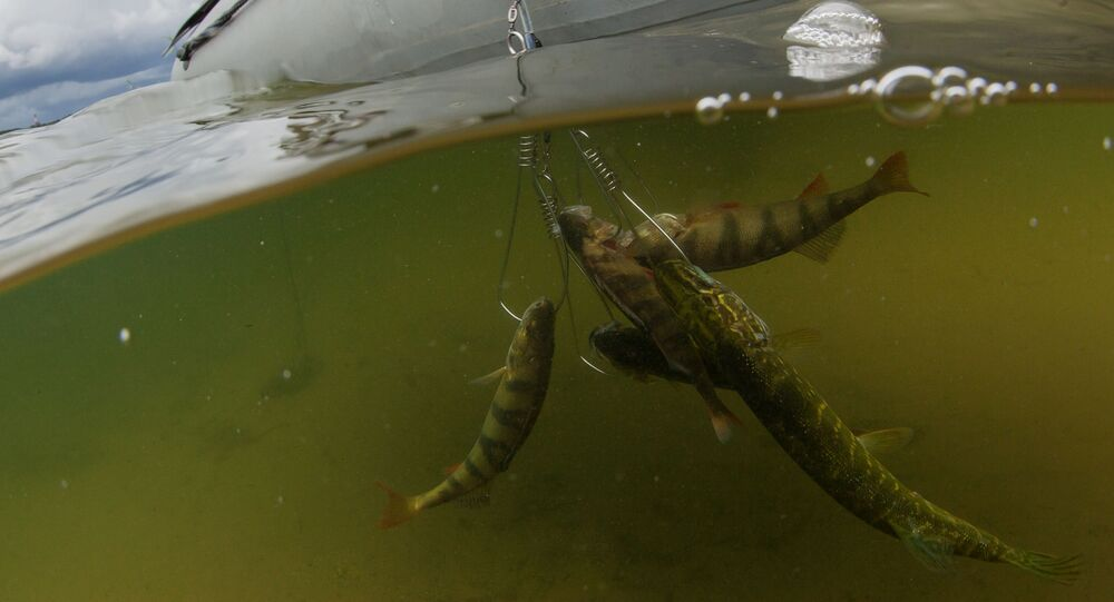 Połów ryb