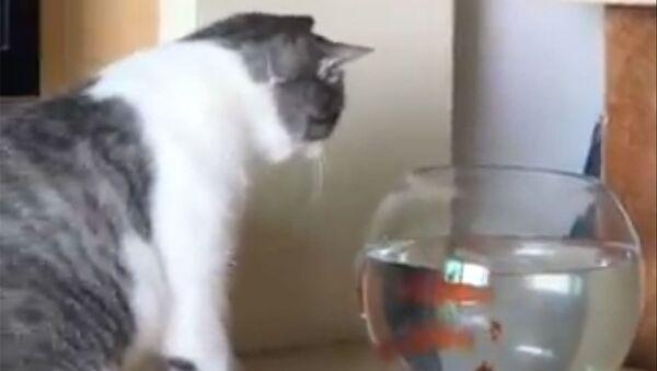 Kot i złote rybki - Sputnik Polska