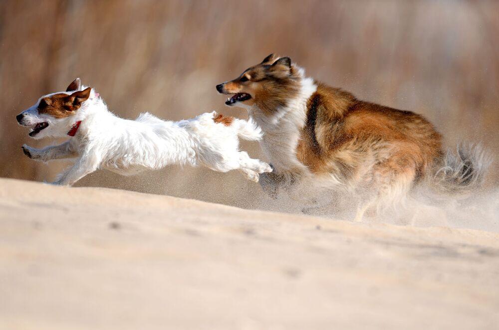 Szkolenie psów w Kazaniu