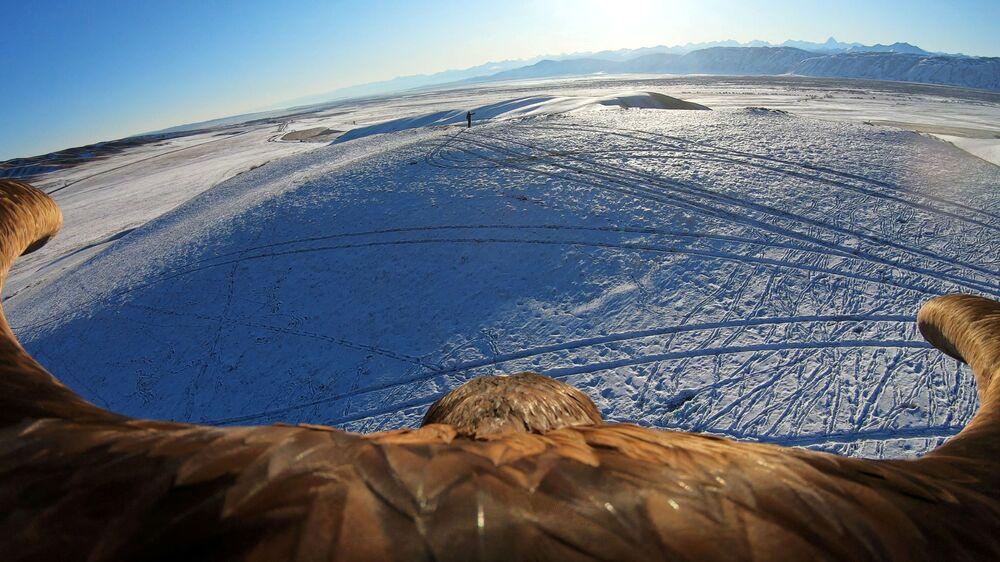 Kadr uzyskany z kamery umieszczonej na orle, podczas tradycyjnego polowania w Kazachstanie