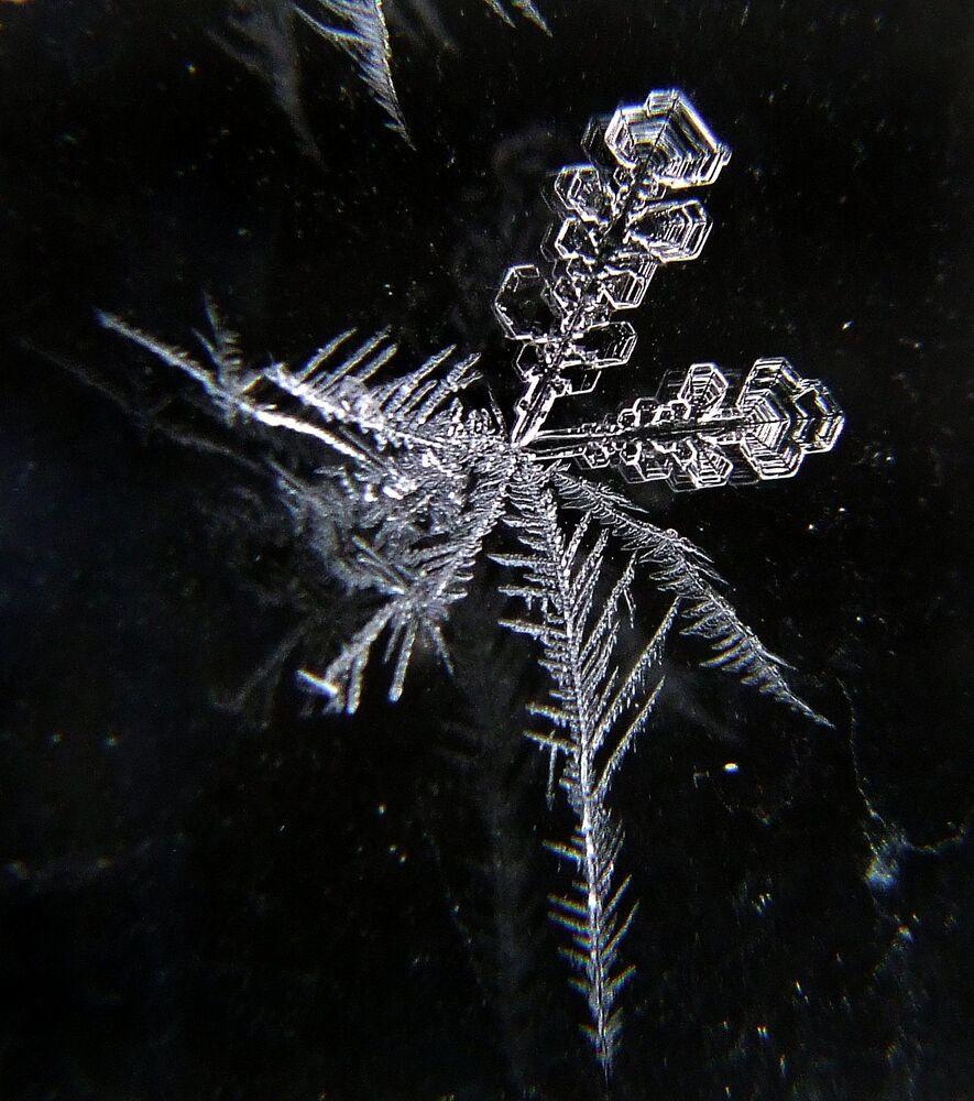 Śnieżynka w trybie macro