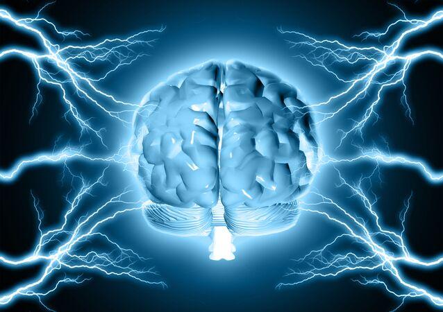 Model ludzkiego mózgu