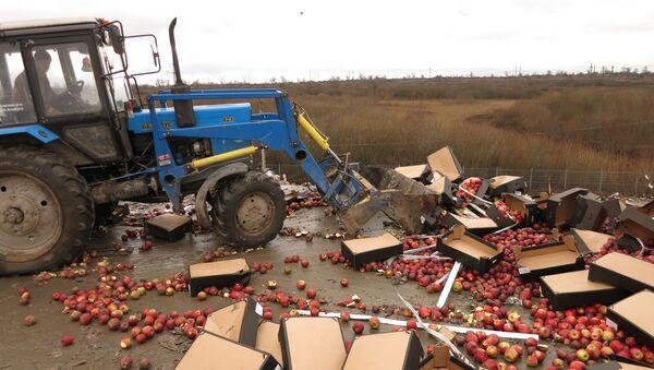 Niszczenie polskich jabłek w obwodzie kaliningradzkim - Sputnik Polska