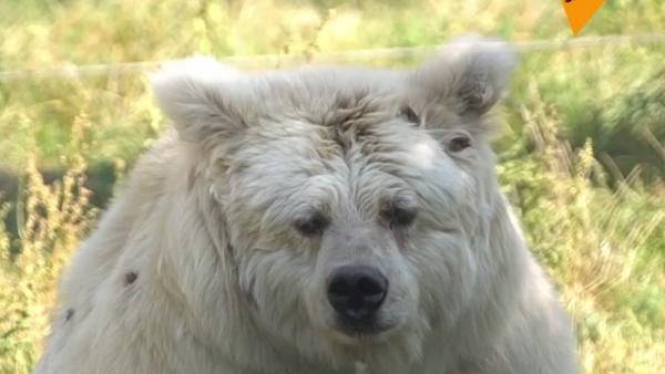 Schronisko dla niedźwiedzi - Sputnik Polska