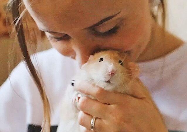 """""""Mama"""" 9 szczurów."""