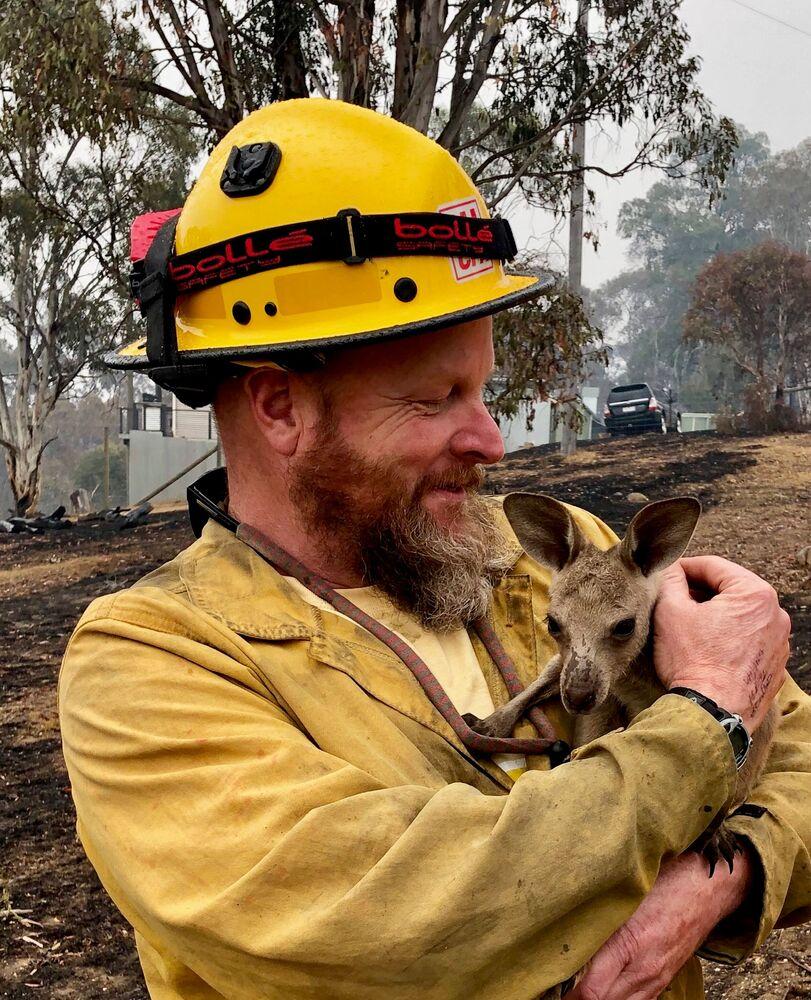 Mały kangur uratowany przed pożarami lasów w Australii.